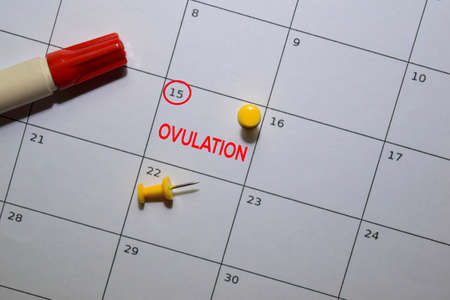 Ovulation write on calendar. Date 15. Reminder or Schedule Concepts