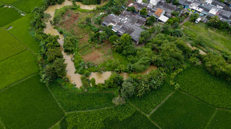 Aerial view beautiful terraced rice fields and residential, Tangerang, Indonesia