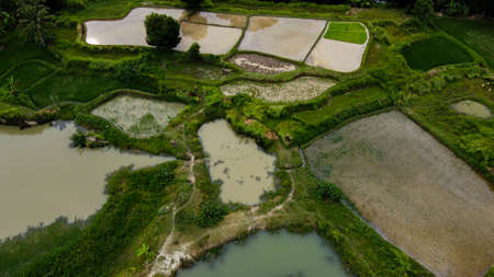Aerial view beautiful terraced rice fields, Tangerang, Indonesia