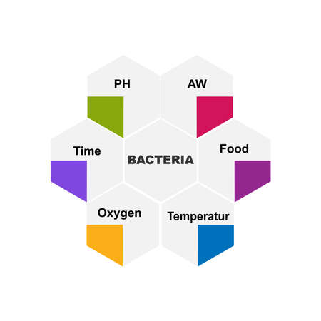 Diagram of Bacteria with keywords. EPS 10 - isolated on white background Stock Illustratie