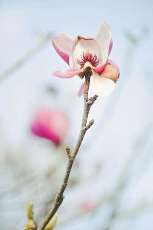 folwer: flower1