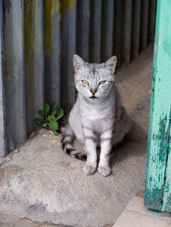 destitute: Close up of a stray cat bus station of Feodosia in Crimea