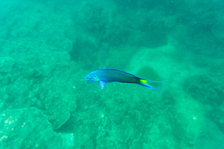 blue fish: coral blue and green fish for us