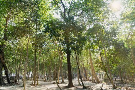 clave sol: bosque verde en la luz del sol y la playa