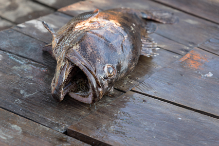 grouper: Grouper fish on the boat from fishing sport and for dinner Stock Photo