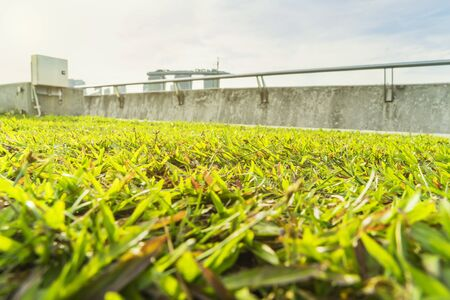 barrage: abstract green grass view with sun light filter - can use to display or montage on product Stock Photo