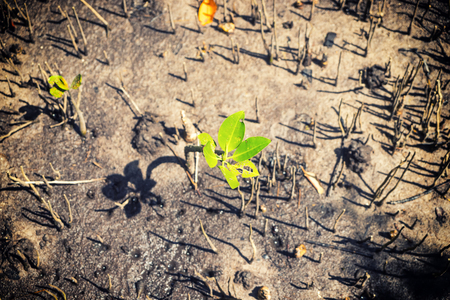 green baby mangrove stand on the ground forest - can use to display or montage on product