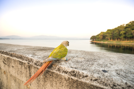single macaw bird on cement bar on sunset time 写真素材