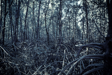 surreal mangrove forest in dramatic haunting scene background in halloween concept Stok Fotoğraf