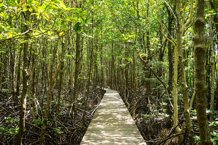 wood way in mangroves forest - can use to display or montage on product