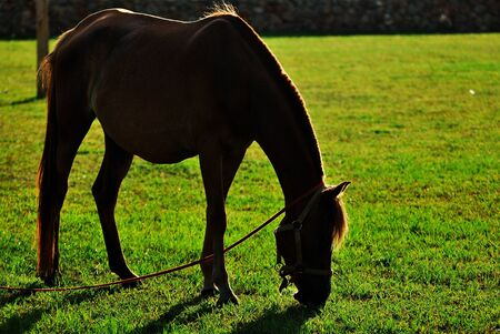 The horse eat grass at the sunset Stock Photo - 15736323