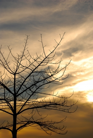 The death tree over sky background in sunset photo