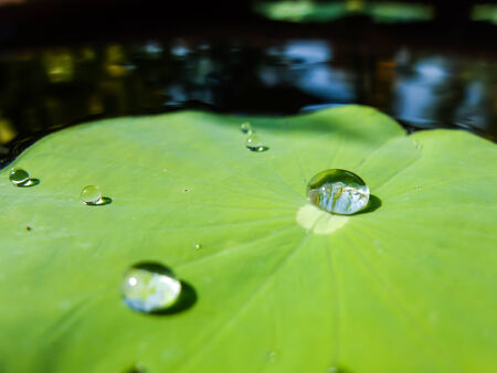 clambering: Big drop water on leaf