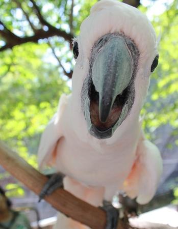 Cockatoo say hi photo
