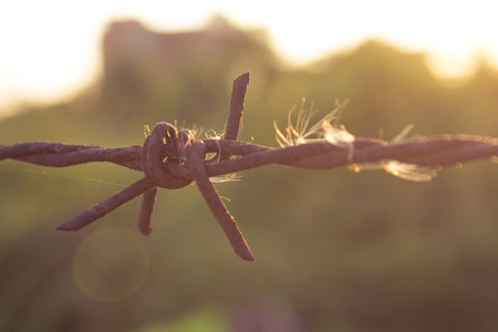 Rusty barbed wire sunset light photo