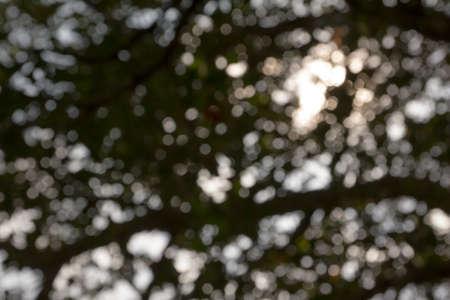 de focus: shadow de focus nature light