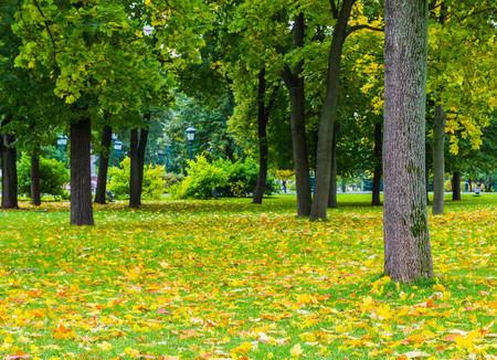 yellow fall on the floor in park
