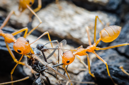 laborious: Ants work together diligently.