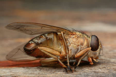 ugliness: Macro shot of a dead housefly