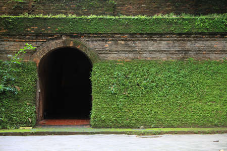 tunnel entrance covered with fern and moss Stock Photo