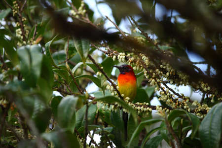 Olive-backed sunbird on a brunch