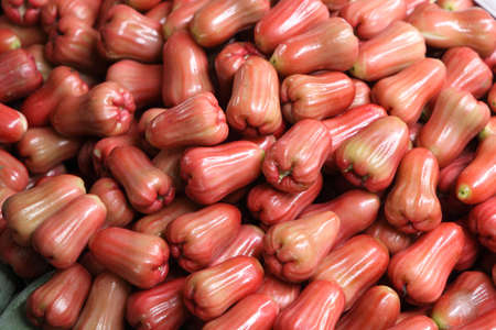 Plenty of red rose apple in Thailand  photo