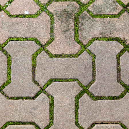 nicely: brick walkway lined with moss up nicely,texture,background Stock Photo