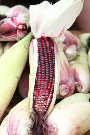 close-up shot of recently harvested corn in red photo