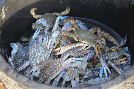 Close up of blue crab in the enameled basin