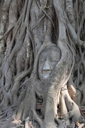 Head of Buddha in a tree trunk Stock Photo