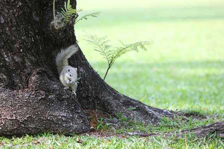 Squirrel on branch of tree with a grass