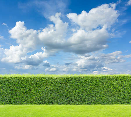 hedge with sky and grass Banque d'images