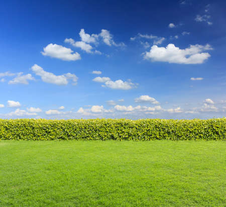 hedge: hedge with sky and grass Stock Photo
