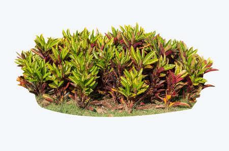 bush isolated on white background 写真素材