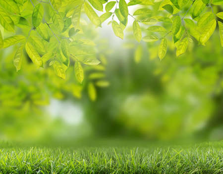 green abstract nature background