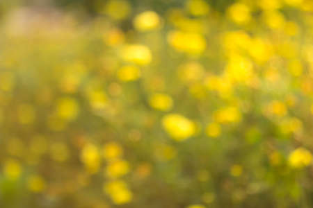 green and yellow abstract natural backgrounds photo