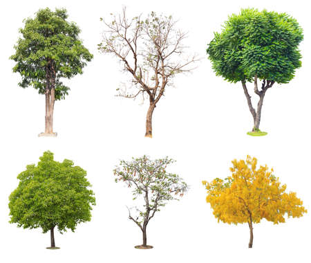 Six Tropical trees isolated on white background Stockfoto