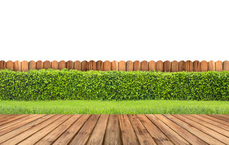 Lawn and wooden floor with hedge and fence isolated. Archivio Fotografico