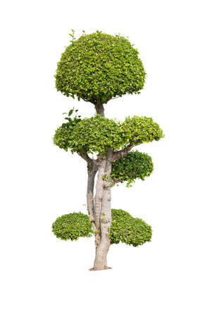 green bush isolated on white background Archivio Fotografico