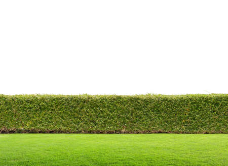 hedges: green hedge isolated Stock Photo