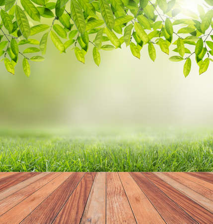 Wooden floor and sunlight nature background.