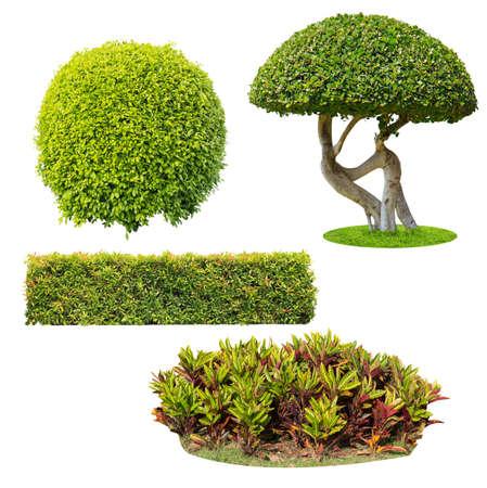 bush op een witte achtergrond geïsoleerde Stockfoto