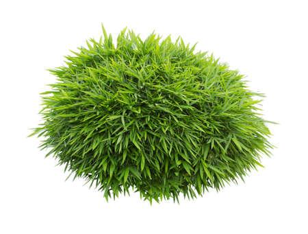 groene struik op een witte achtergrond Stockfoto