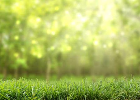 grün abstrakten Natur Hintergrund Standard-Bild