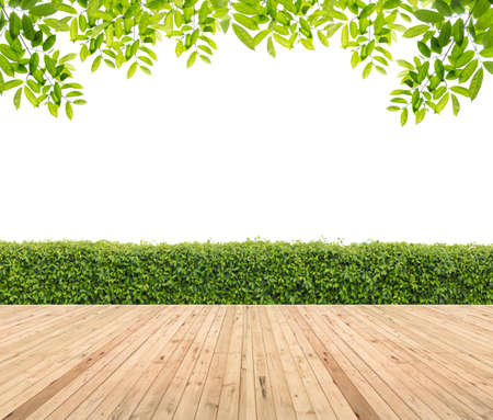Wooden floor with hedge for background.