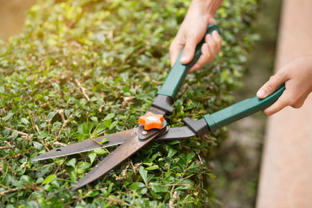 Gardener cutting a hedge with garden shears Banque d'images