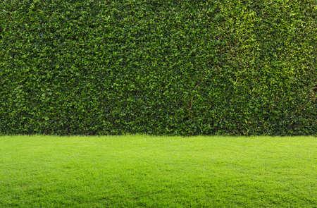 groen gras en heg Stockfoto