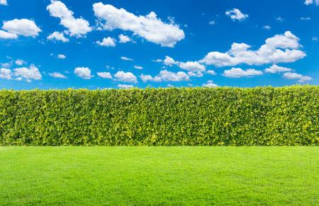green bush on sky background. Imagens