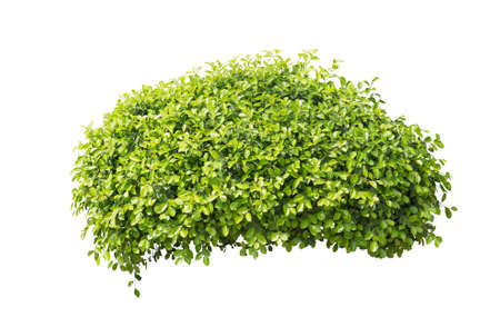 bush isolated on white background Stock Photo