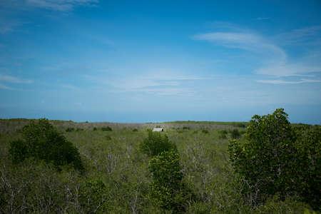 mangroves: Little house in the mangroves